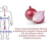 La cipolla stimola il testosterone
