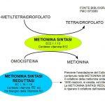 La Rigenerazione della Metionina Sintasi