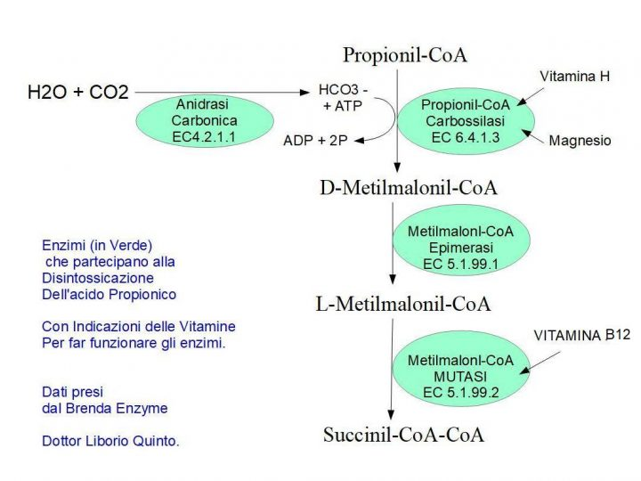 Disintossicazione da Acido Propionico