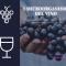 I microorganismi del vino