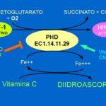 Vitamina C e Ossigeno