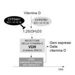 Vitamina D e Cyp24A1