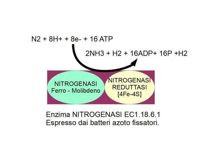 La NITROGENASI: Dall'Azoto alle Proteine