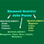 Elementi Nutritivi delle Piante