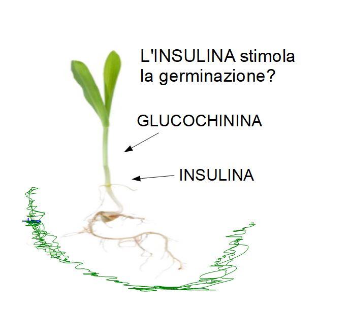 La Glucochinina: L'insulina delle Piante