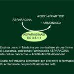 ASPARAGINASI contro i Tumori e Acrilammide