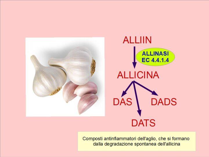 L'Alliin dell'aglio, e le sue virtù