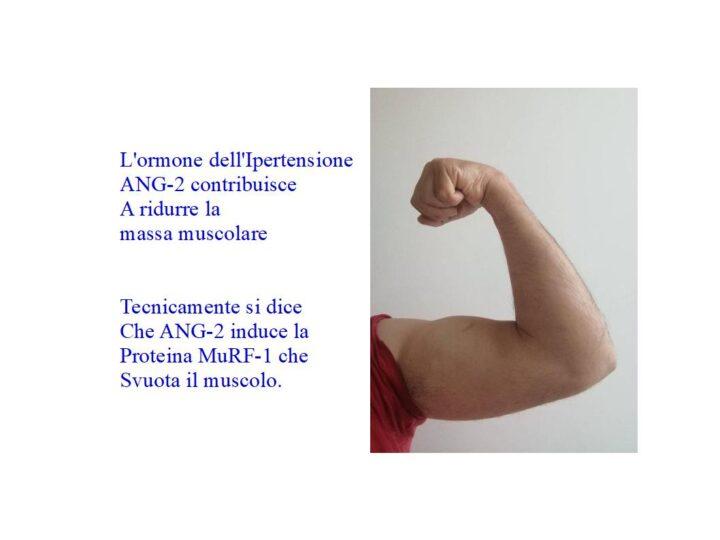 Ipertensione sopprime la massa muscolare