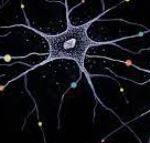 Neurogenesi e Plasticità Neuronale