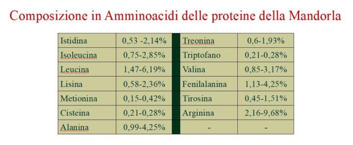 """La Mandorla dolce """"Prunus dulcis"""" composizione in amminoacidi delle proteine"""