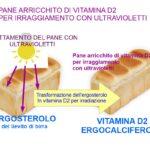 Pane arricchito di Vitamina D2 per irraggiamento con UV